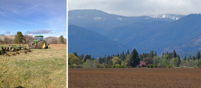 Right: Plowing into new soil.Left: The Dare field ready for planting.