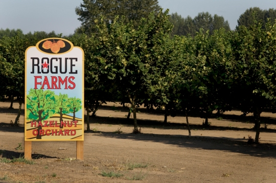 The Kirk's orchard is next door the Rogue Farms Hopyard in Independence, Oregon.