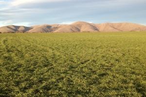 Risk Barley Tygh Ridge Rogue Farms craft beer