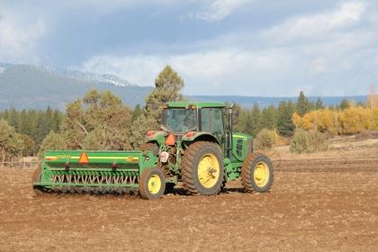Drilling barley
