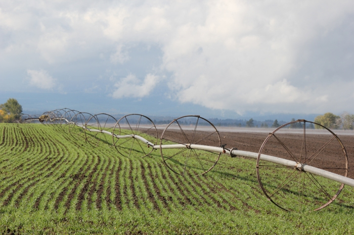 Irrigation Wheels Risk Barley 2 Oct 2012 web