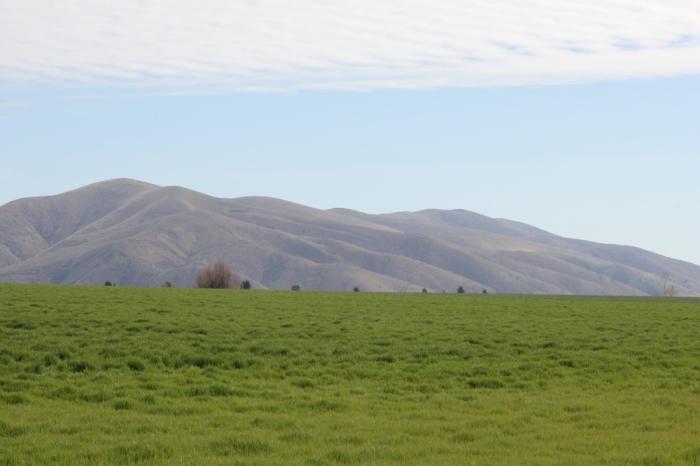 Risk Barley Tygh Ridge web