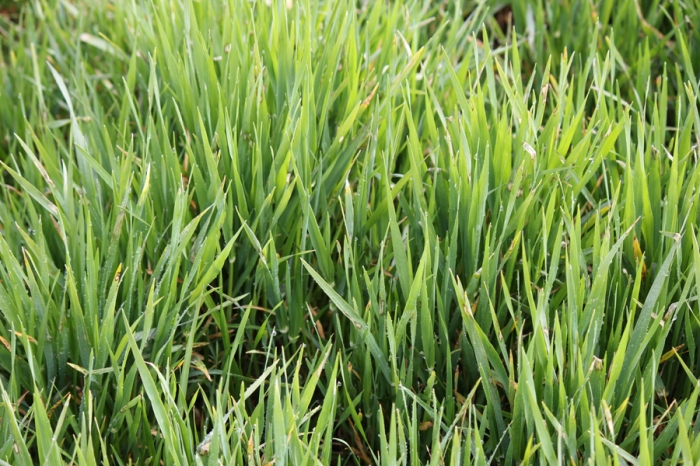 Risk Barley web