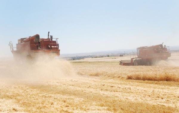 BarleyHarvest_forweb10