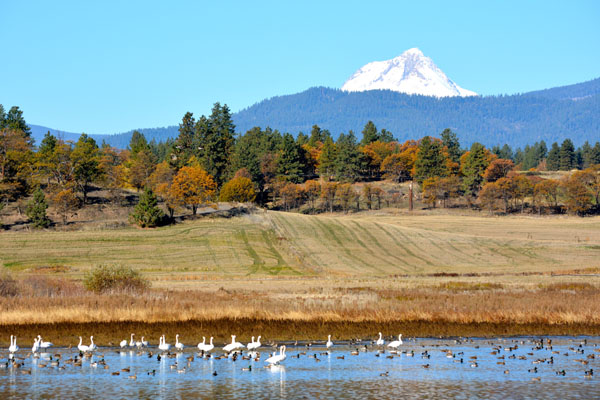 More than two dozen ponds and creeks attract migrating swans and ducks as well as Bald Eagles and Osprey.