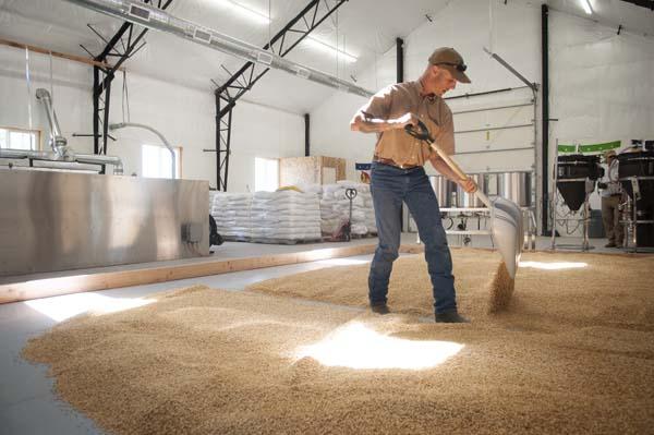 Flipping our barley on the floor of the Farmstead Malt House.