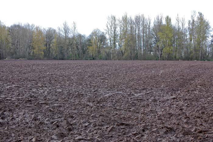 empty rye field