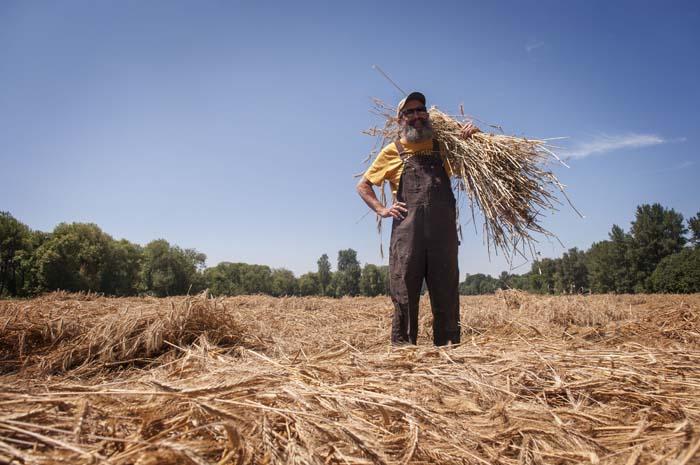 john rye harvest 2013