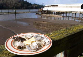 Fresh Yaquina Bay Oysters at Oregon Oyster Farms.