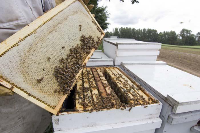 Honey Harvest - John Maier - 037_070114