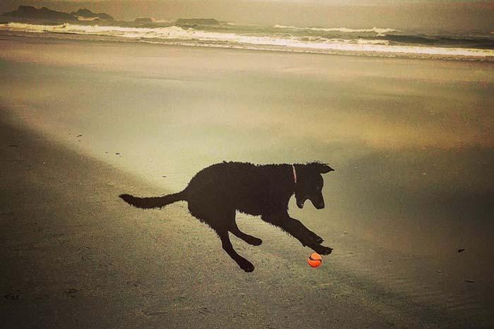 Muddy on beach