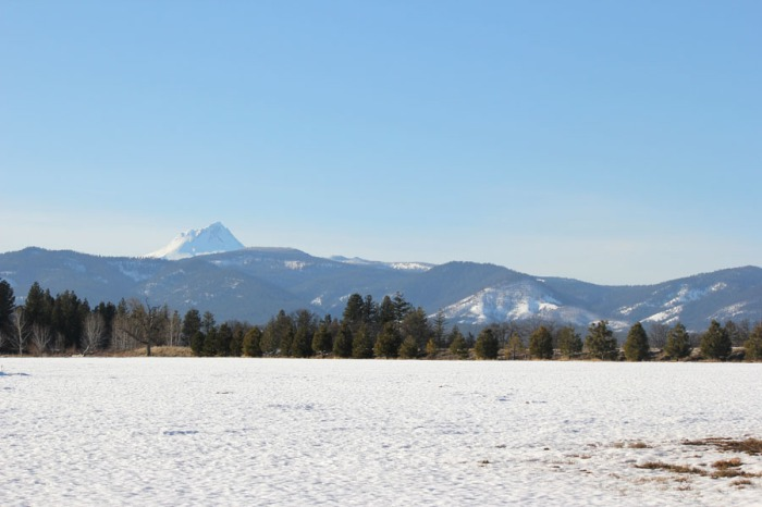 A snow covered field of barley with a view of Mt. Hood.