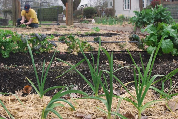 Spring planting season in the Revolution Garden of Rogue Spirits.