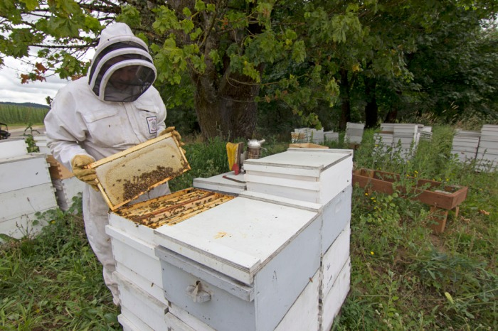 The honey harvest at Rogue Farms in Independence, Oregon.